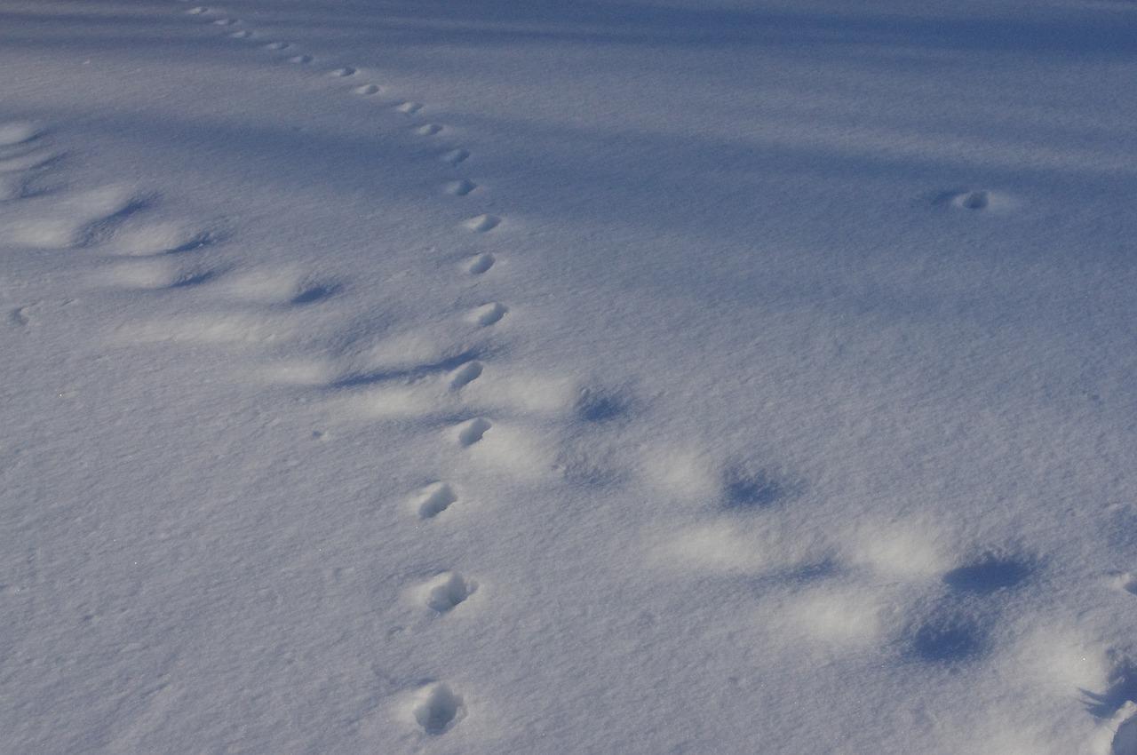 footprints-4924962_1280